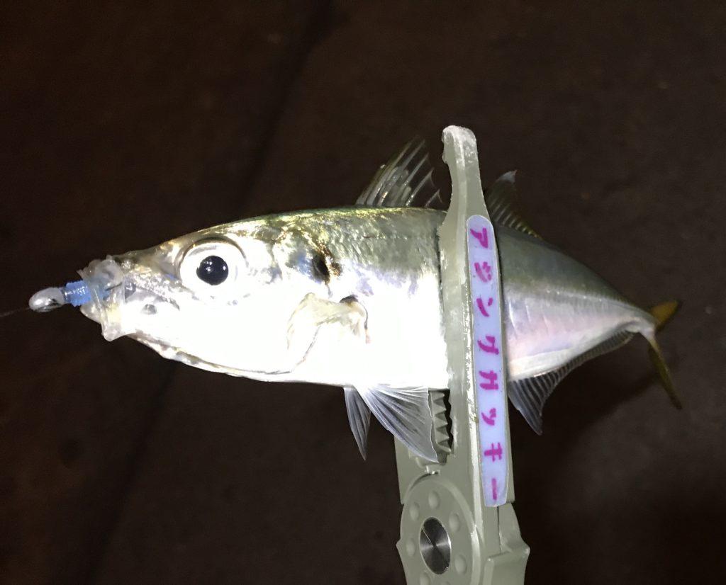 【アジング】夜中の釣れない時にアジを見つける方法